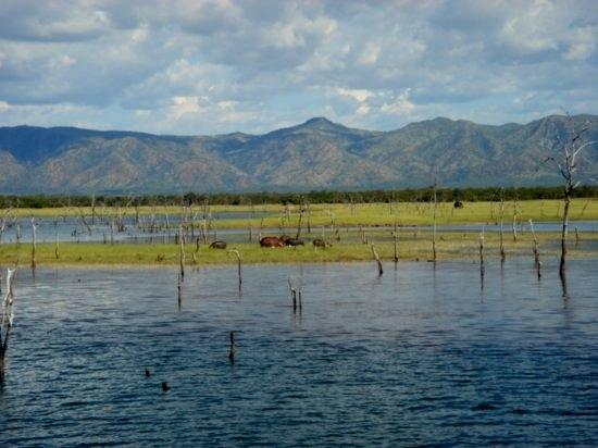 Hippos at Lake Kariba