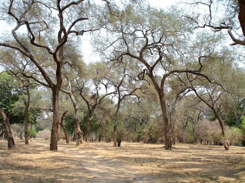 Typical African bush in Zimbabwe