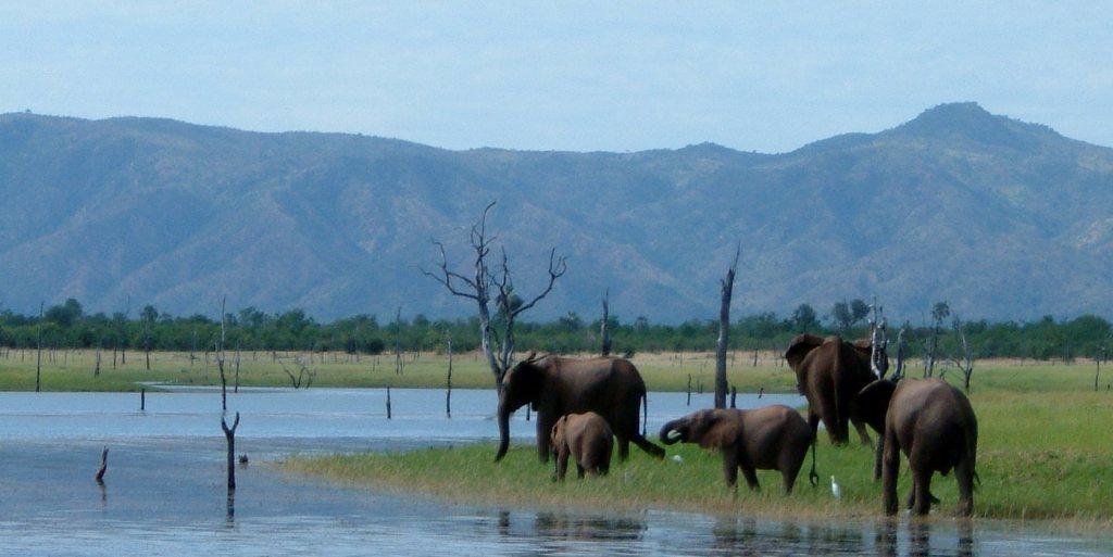 Elephants on the shores of Lake Kariba